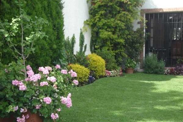 Cmo mantener los jardines y plantas sanos cuidado de plantas for Estrellitas de jardin planta