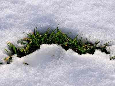 cuidar-cesped-invierno