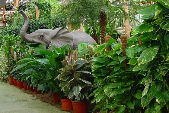 Plantas para el interior de la casa en color verde for Decoracion con plantas para exteriores