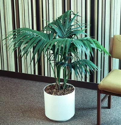 Cuidado de plantas page 78 - Plantas de interior tipos ...