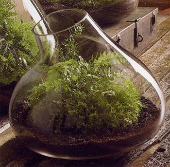 Cuidado De Las Plantas De Un Terrario Cuidado De Plantas - Terrario-para-plantas