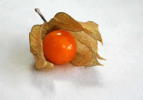fruto-physalis