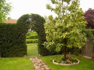 Arboles decorativos para jardin ms de ideas increbles - Arboles decorativos jardin ...