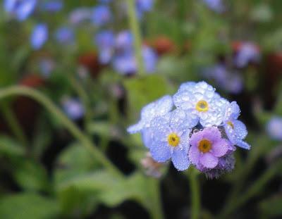 imagenes-plantas