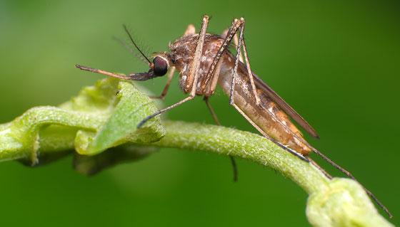mosquitos-en-los-estanques