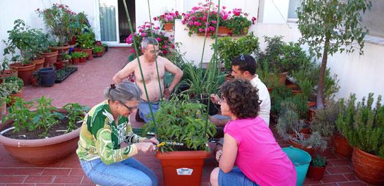 cultivo-hortalizas-macetas
