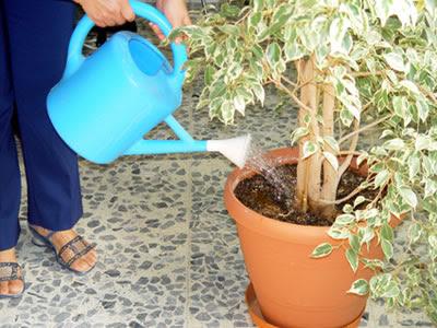 riego | cuidado de plantas