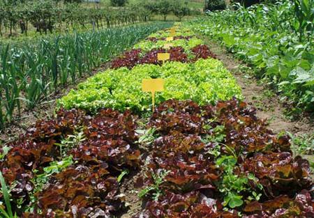 Los cuidados de un huerto cuidado de plantas for Que plantas se siembran en un huerto
