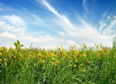 como-cuidar-las-plantas-en-verano