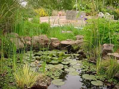 estanque_con_plantas_de_distintas_profundidades1