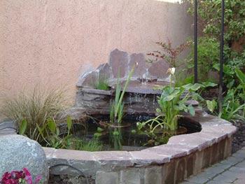 Plantas acu ticas cuidado de plantas for Patios con piedras decorativas