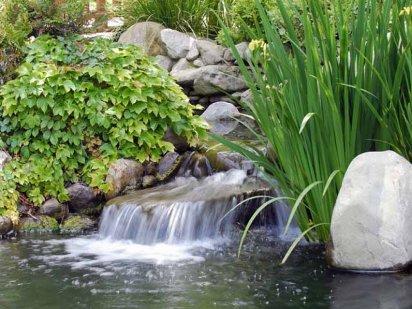 Dise o de jardines cuidado de plantas page 3 for Jardin acuatico