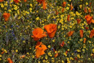 jardines-con-poca-agua_323x216