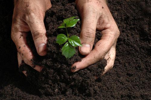 Razones-para-plantar-arboles1