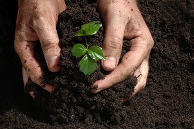 Razones-para-plantar-arboles11