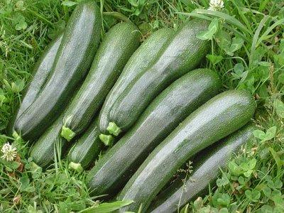 cultivo-de-calabacines