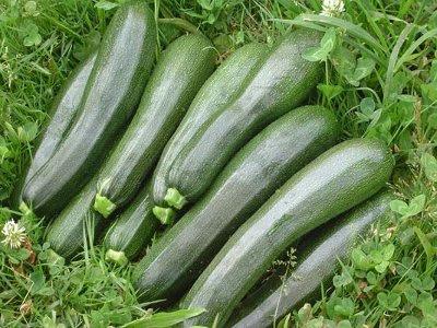 cultivo-de-calabacines1