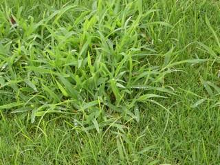 eliminar-malas-hierbas-1