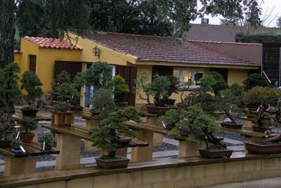 un-bonsai-mucho-mas-que_590x3951