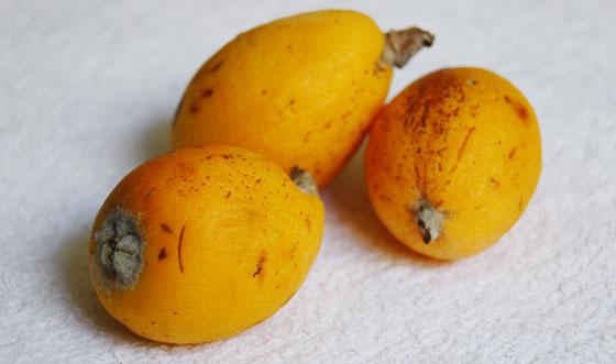 variedades-de-nisperos