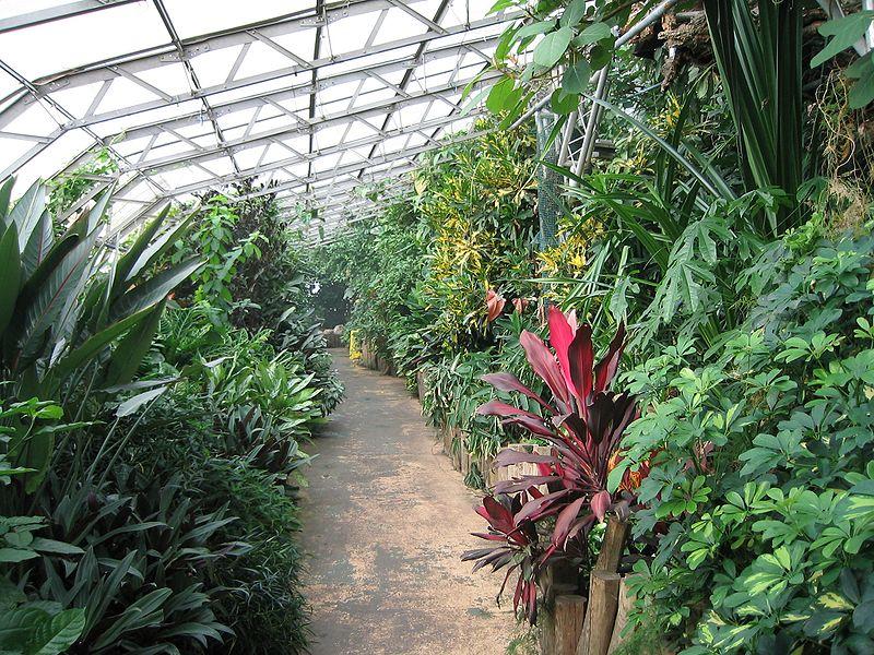 Tropicales  Cuidado de Plantas