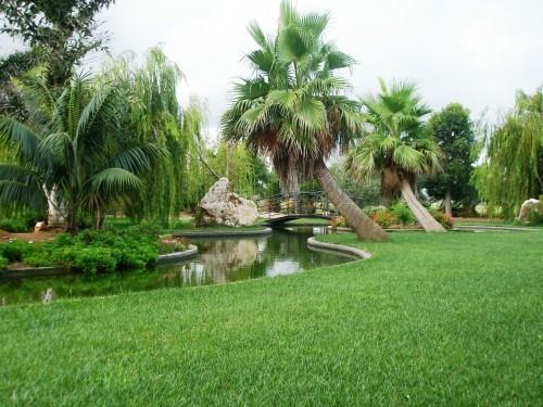 botanic-cullera-jardin-botanico_499267