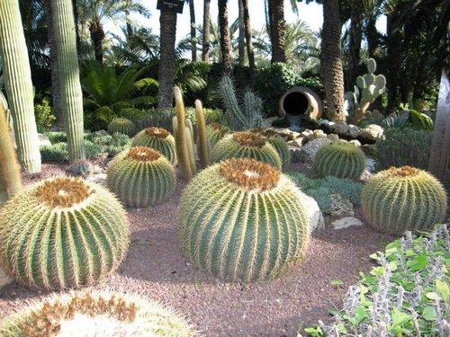 cactus-25281-2529