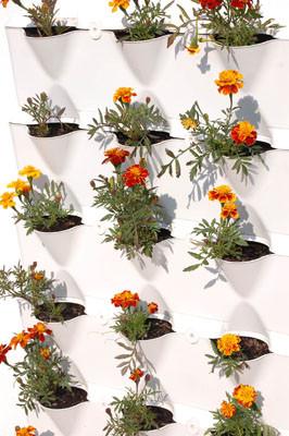 Plantas da inas cuidado de plantas for Plantas ornamentales de interior