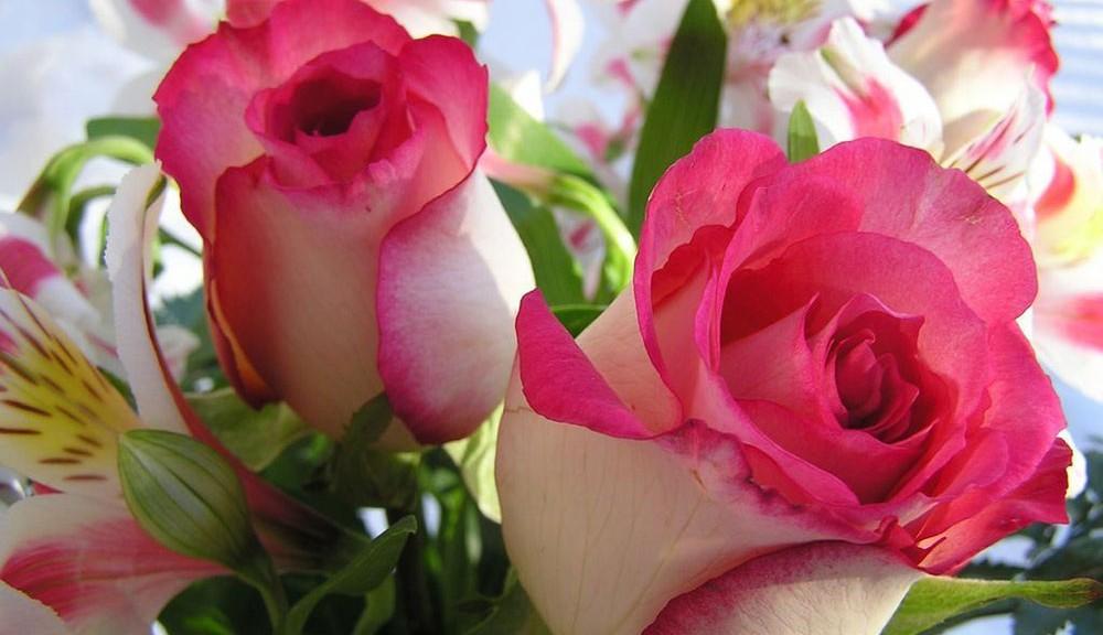 fotos-de-flores-rosas-1