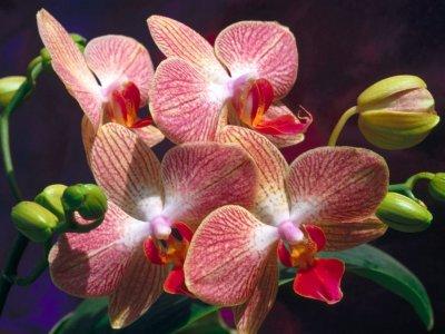 morfologia-de-las-orquideas