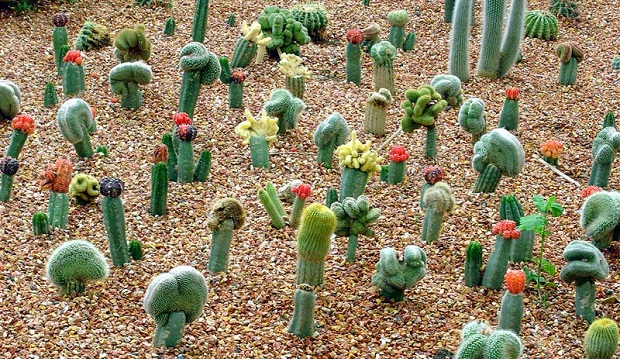 riego-de-cactus