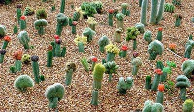 riego-de-cactus1