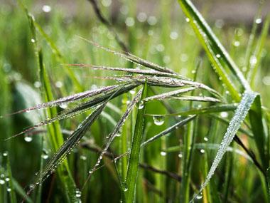 Agua-de-lluvia-uso-en-jardiner-25C3-25ADa