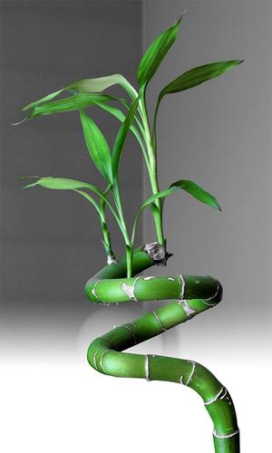 Feng shui cuidado de plantas for Plantas para tener en casa segun el feng shui
