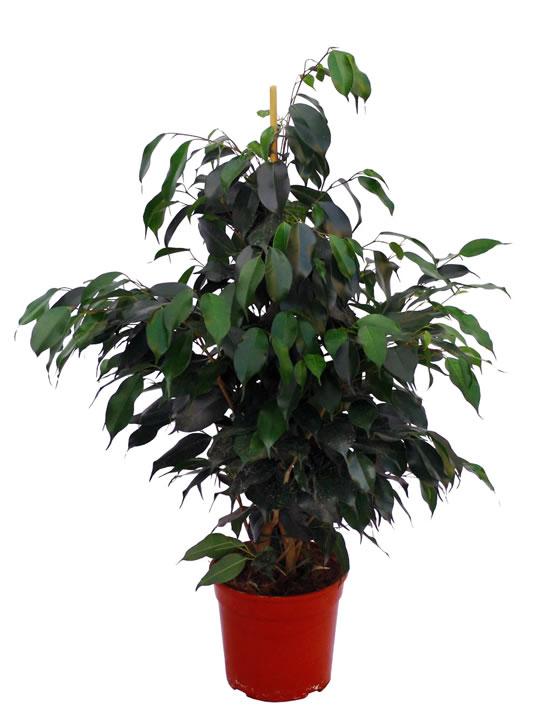 podar | cuidado de plantas