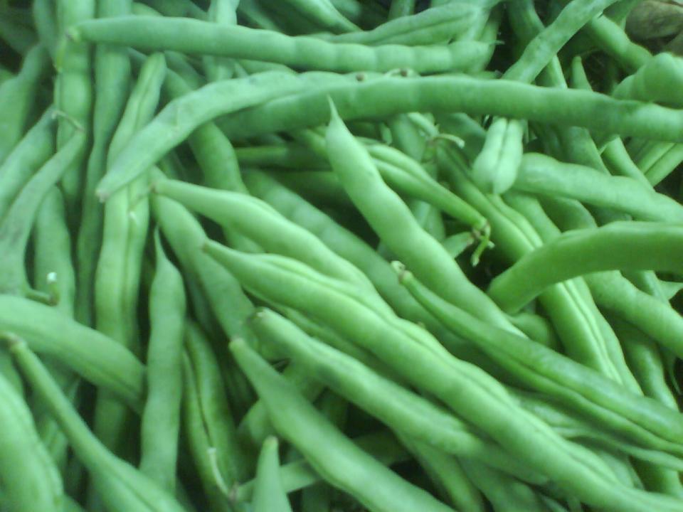 Como cultivar la habichuela en casa cuidado de plantas - Como preparar unas judias verdes ...