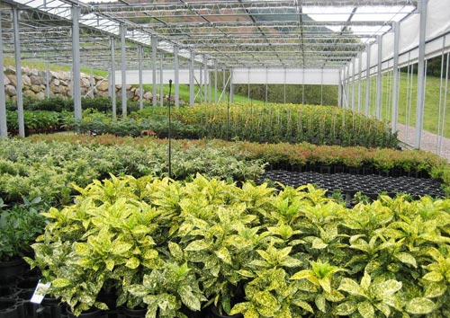 Invernadero cuidado de plantas for Materiales para un vivero