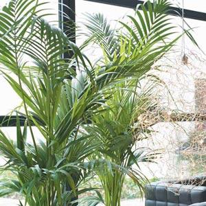 Plantas de interior cuidado de plantas for Plantas verdes de interior