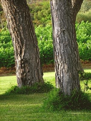 plantar-hierbas-bajos-los-pinos