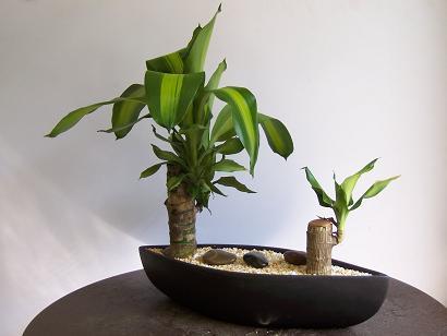 Algunos consejos para las plantas en la oficina cuidado for Decoracion de oficinas con plantas