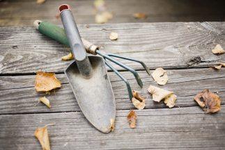 tareas-de-jardin-durante-el_323x2161