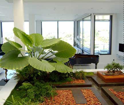 Decorar con plantas cuidado de plantas for Consejos para decoracion de interiores