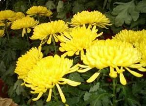 El-Significado-de-las-flores-300x218