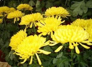 El-Significado-de-las-flores-300x2181