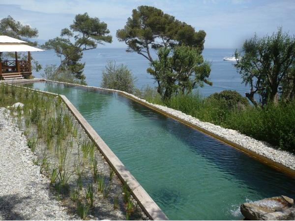 piscina cuidado de plantas On diseno piscinas naturales