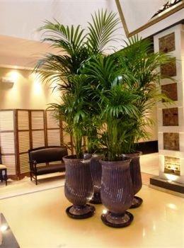 plantas-de-interior-11