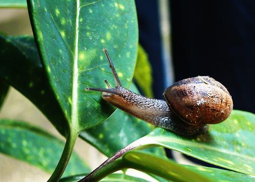 cuidado de plantas page 7 ForCaracol De Jardin Alimentacion