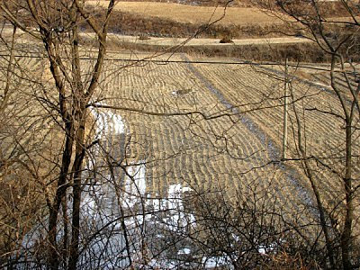 4347275-campo-de-arroz-en-invierno-en-corea1