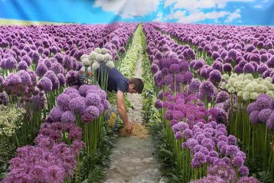 miles-de-flores-inundan-famoso-15_590x3951