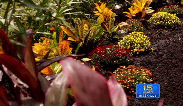 plantas-y-flores-de-la_590x342